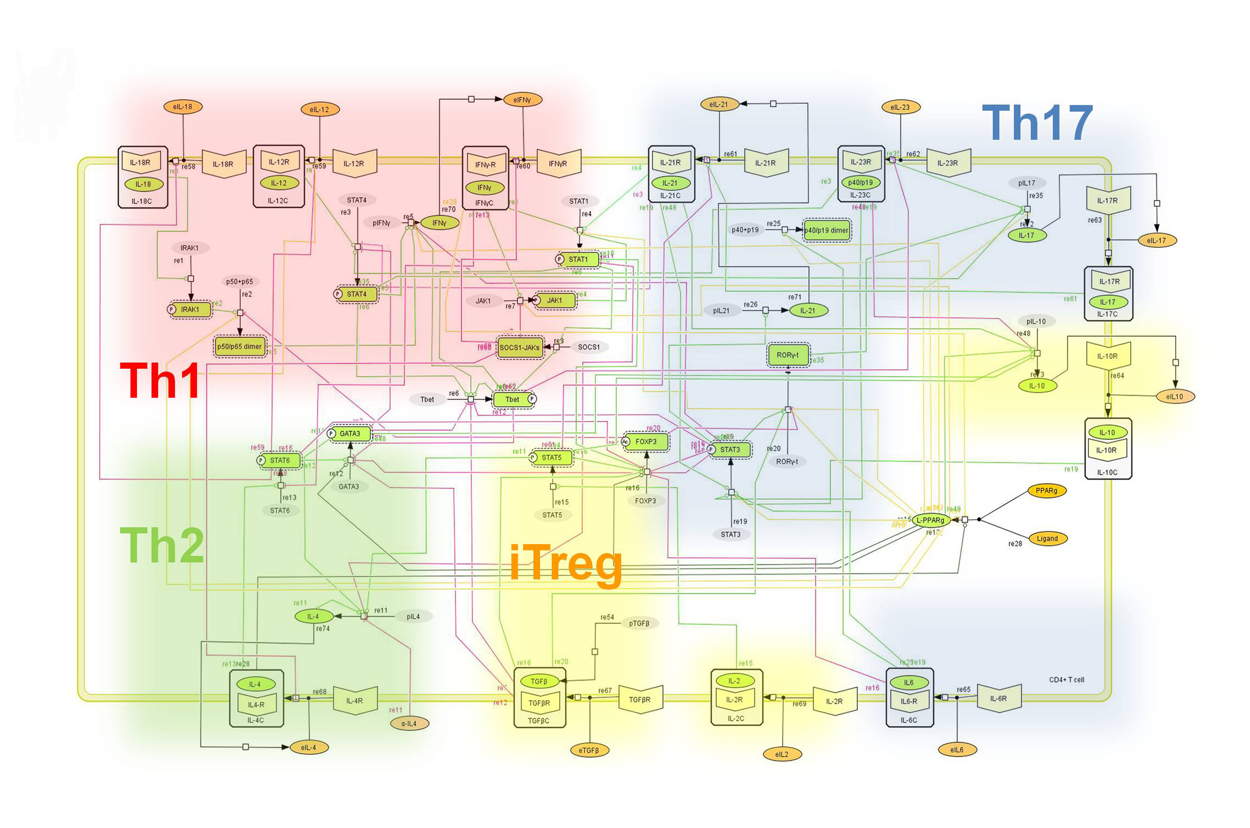 Modeling Nlrx1 Response To Hpylori Nutritional Immunology And Series Parallel Circuit Diagram For Kids Furthermore Figure 1 Network Model Illustrating The Complex Intracellular Signaling Pathways Transcriptional Factors Controlling Cd4 T Cell Differentiation